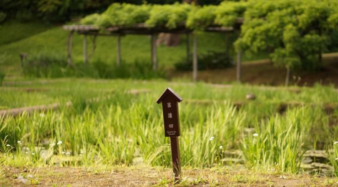 Dixième jour : Jardin du Koishikawa Koraku-en et Tokyo Dome